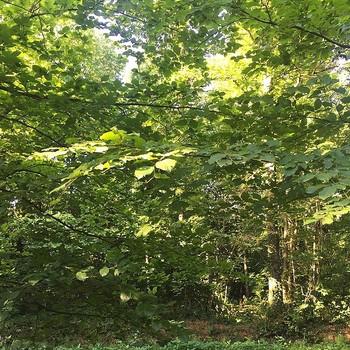 [ Colorthérapie] On dit que les arbres ont une vie secrète. On sait maintenant, en grande partie grâce à @peter_wohlleben, qu'ils s'aident entre eux et que leur vie est plus proche de celle des humains que ce qu'on imaginait. À Fontaine-Daniel en tout cas, ils sont les seigneurs de ces lieux et invitent en cette saison à une immersion verdoyante et bienfaisante. Sur cette image, la vue en face de la boutique à la Manufacture. #fontainedaniel  #mayenne #paysdeloire #toilesdemayenne  #mcommemayenne #colorthérapie #trees #forest #nature #spring #fabricationfrançaise #fontainedaniel #tissagetoilesdemayenne #savoirfairefrançais #epv #décorationintérieure #decoration #homedecor #homeinspiration #home #homesweethome #interiorliving #architectureintérieure #êtrebienchezsoi